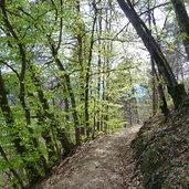 D-5440-kalterer-hoehenweg-fruehlingswald.jpg