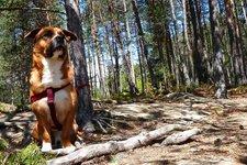 Hund Haustier -> LA Hund im Wald 2011