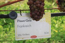 RS Pinot Gris Session three